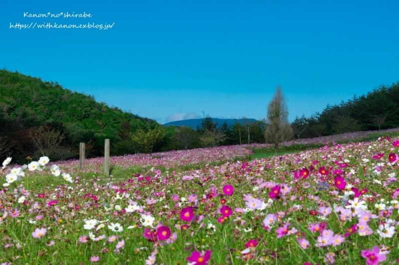 せら花の駅_d0148187_21373142.jpg