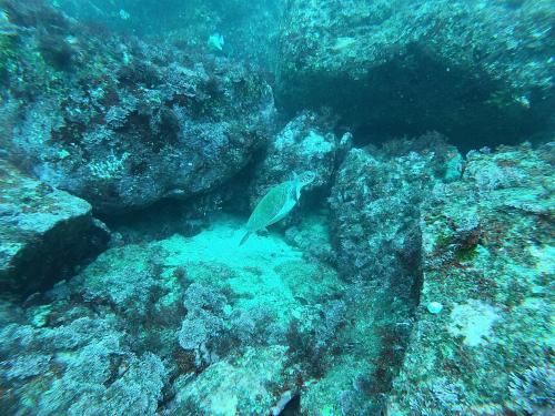 南のお魚 まだまだたくさん!_e0154157_00232853.jpg