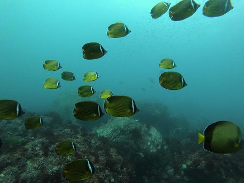 南のお魚 まだまだたくさん!_e0154157_00251442.jpg