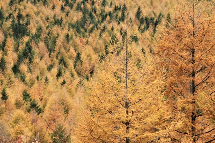 秋の装い_f0282759_00161253.jpg