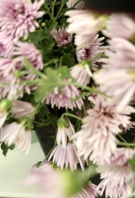 ほとんどのお花を摘み取った季節の花々をつかって こちらのクラスではレッスンをしています_c0128489_17415186.jpeg
