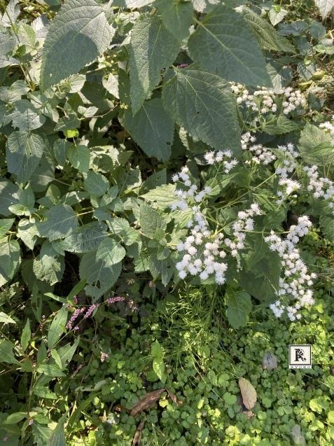 ほとんどのお花を摘み取った季節の花々をつかって こちらのクラスではレッスンをしています_c0128489_17424368.jpeg