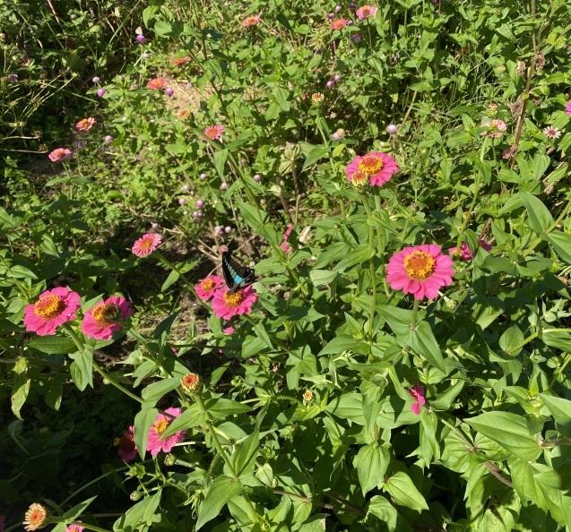 ほとんどのお花を摘み取った季節の花々をつかって こちらのクラスではレッスンをしています_c0128489_17430553.jpeg