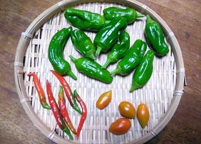 夏野菜の限界_b0266191_12205118.jpg