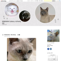 MINKWINのHappy sunday - MINKWIN Cattery &Pretty Aki