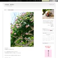 春色―京都府立植物園とか京都御苑とか - 一年365日 京日和 Ⅱ
