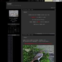 ・キビタキ - 鳥見撮り