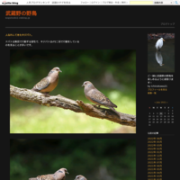 MFのクロジ - 武蔵野の野鳥