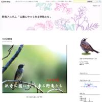 7月に観察した種 - 野鳥アルバム 「公園にやって来る野鳥たち」