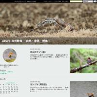 奥日光小田代ヶ原湿原 - azure 自然散策 ~自然・季節・野鳥~