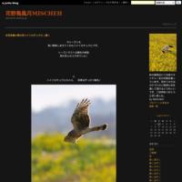 野鳥賛歌2018(動画)と動物愛護 - 花野鳥風月MISCHEH
