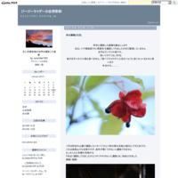 高層湿原の彩り(コオニユリ) - ジージーライダーの自然彩彩