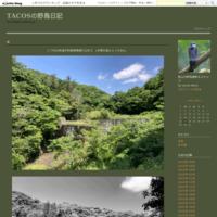 今日も雨 - TACOSの野鳥日記