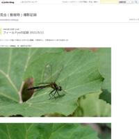 フィールドn3の記録(悩んだヤツ) 2020/8/23 - 昆虫(動植物)撮影記録