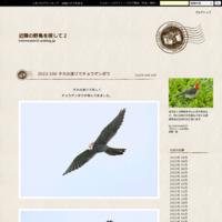 2021-014 ヒバリとタヒバリ - 近隣の野鳥を探して2