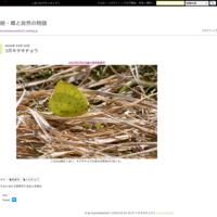 秋のモンキチョウ - 続・蝶と自然の物語