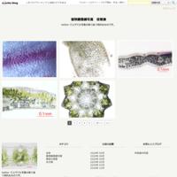 カーネーション(スプレータイプ) - 植物顕微鏡写真 保管庫