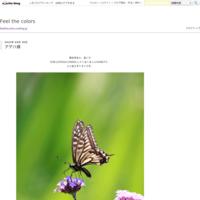 紫陽花 - Feel the colors