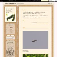 ホトトギス到着@三重中部 - ちいさな森-mode:κ-