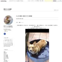 天国への手紙2018 - 愛犬カフェの出産記