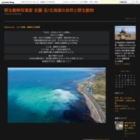 ヤツガシラ2羽登場!!! - 野生動物写真家 佐藤 圭/北海道の自然と野生動物