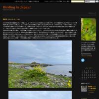 クロジ(Grey Bunting)/2021.05 - Birding  in  Japan!
