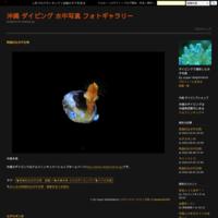 シシマイギンポ~沖縄本島~ - 沖縄 ダイビング 水中写真 フォトギャラリー