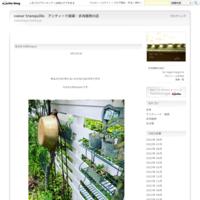 ワークショップの御礼☆ - coeur tranquille アンティーク雑貨・多肉植物の店