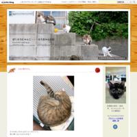 「ドコノコ」アプリに登録している福来の迷子掲示板に似たような子の久々の目撃投稿。 - ばくふうにゃんこ・・・ふうちゃん日記
