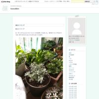 小松菜を収穫 - Sawaddee