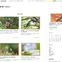 冬の安威川で鳥×撮り2019.01 - 鳥×撮り+あるふぁ~