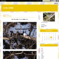 北国の初夏「エゾフクロウの雛誕生」 - 北の旅人写真館