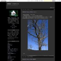 三徳山百花譜その32地蔵堂から見たタムシバと文殊堂 - 御香屋14代あれこれ
