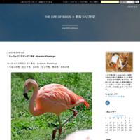 シロハラクイナはトカラ列島以南の琉球列島に留鳥として分布 - THE LIFE OF BIRDS ー 野鳥つれづれ記