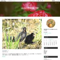 シジュウカラ特集 - zorbaの野鳥写真と日記