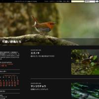 2017年6月マミジロ動画 - 可愛い野鳥たち 2