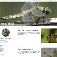 嬢ちゃんのご馳走アジアイトトンボ - 権兵衛の蜻蛉雑録