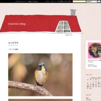 アマサギ - Charine's Blog