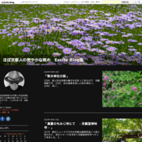 「京都西山の紫陽花-善峯寺-」 - ほぼ京都人の密やかな眺め Excite Blog版