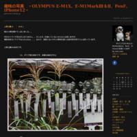染谷花しょうぶ園-3027) - 趣味の写真 ~OLYMPUS E-M1X、E-M1MarkⅢ&Ⅱ、PenF、iPhone12~