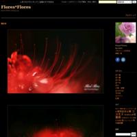 * - Flores*Flores