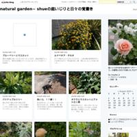 もう芽がでたよ! - natural garden~ shueの庭いじりと日々の覚書き