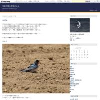海岸散歩 - 写真で綴る野鳥ごよみ