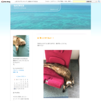 今日のお弁当~肉野菜炒め焼肉味~ - 私的日常生活