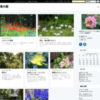 ① ピンクの小花 <シモツケ> - 魚の庭