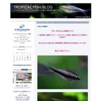 報告! - ビーボックスアクアリウム 熱帯魚情報