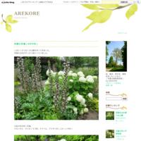 横浜、正覚寺の紫陽花、花菖蒲 - AREKORE