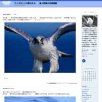以前この時期飛来した・・鮭食うクロヅル^^ - アイヌモシリの野生たち  獣と野鳥の写真図鑑