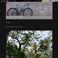 コオニユリ - 四十の手習い 自転車と写真が好き