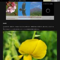 クロコノマチョウ、クロアゲハ10倍速動画 - SAMARAwの花鳥風月(Photolog)